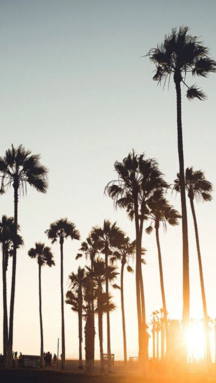 Pin By Elle Bisheimer On Lockscreens Palm Trees Palm Trees Tumblr Travel Around The World