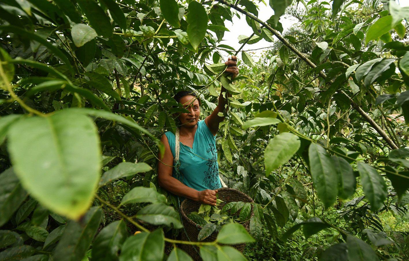 The Amazon Rainforest Also Known As Amazonia Or The Amazon Jungle