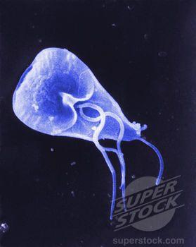 Giardia Parasite In Humans Natural Treatment