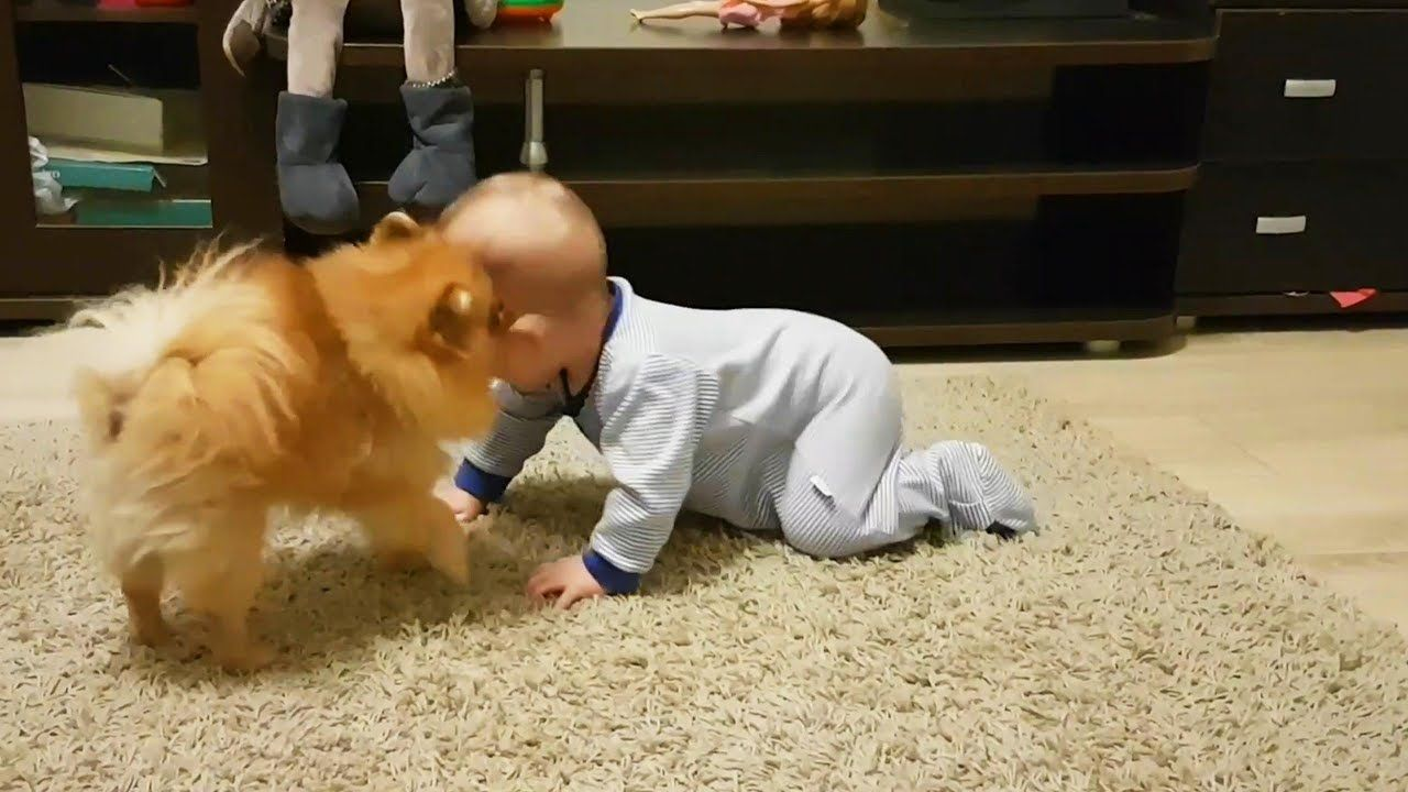 Dogs babysitting babies dogs love babies funny pets funny