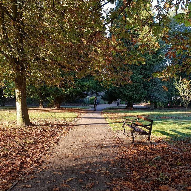 Long shadows. stalbans hertfordshire autumn england