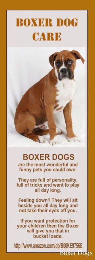 Boxer Dog Training Boxer Dogs Boxer Dog Care Boxer Puppy