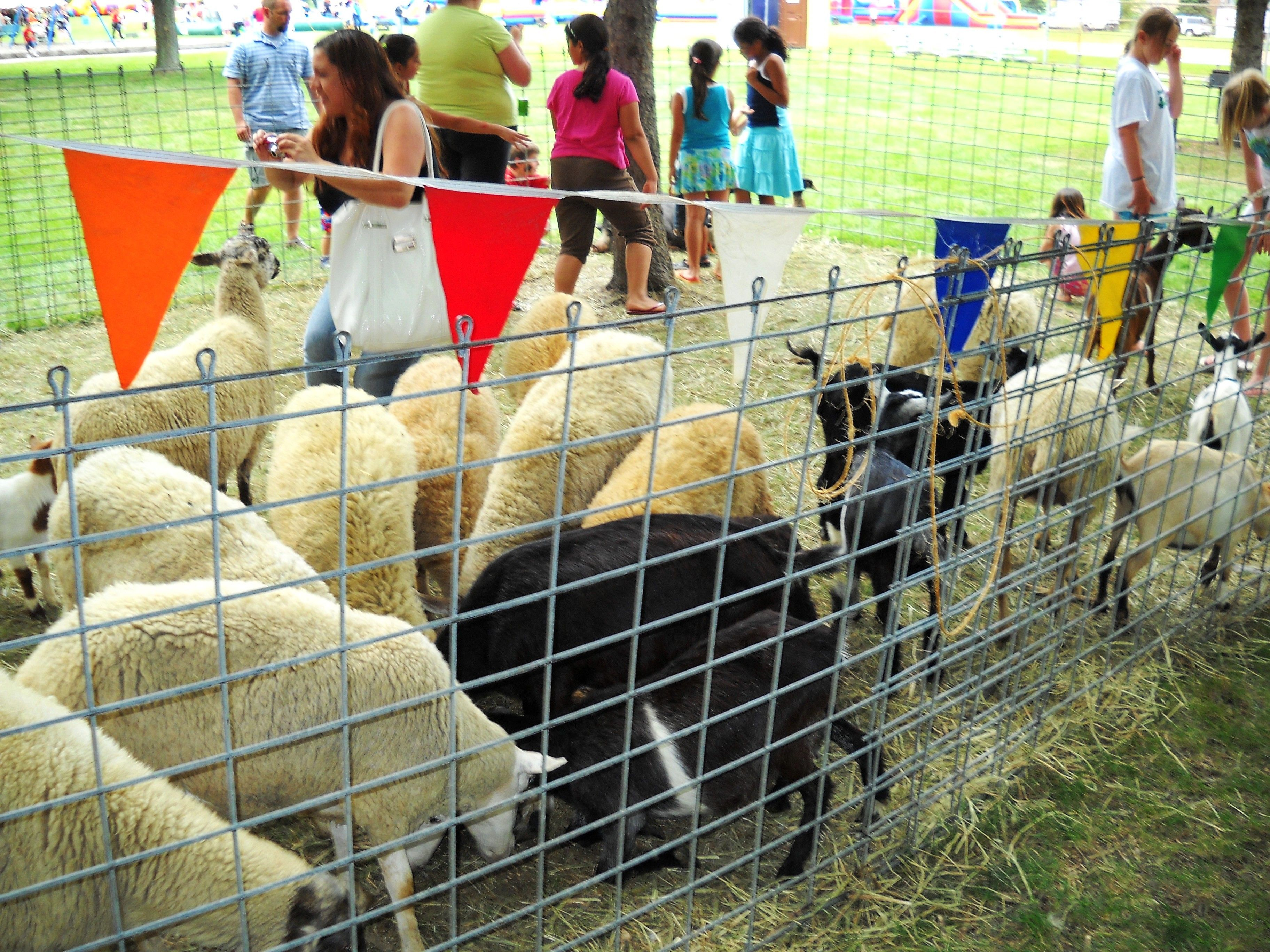 Fun Petting Zoo Chicago Party Rentals (With images) Pony