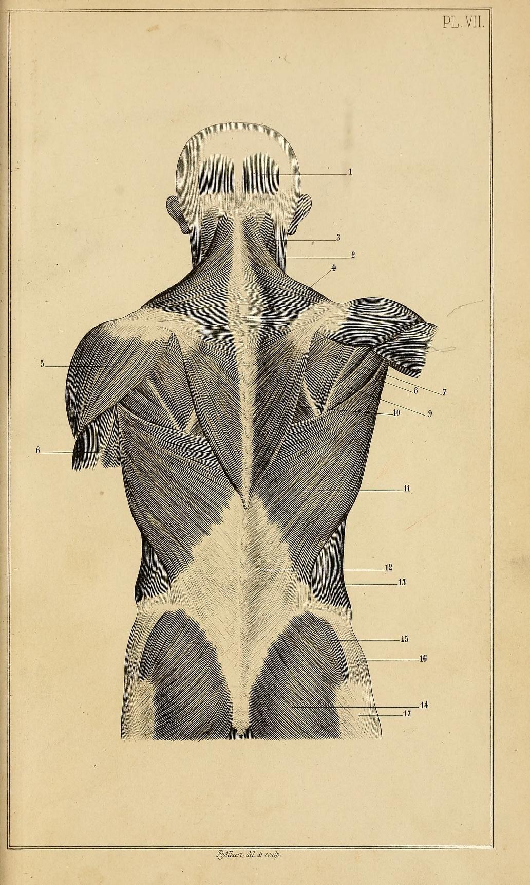 Atemberaubend Verbinden Und Zugangscode Anatomie Und Physiologie ...