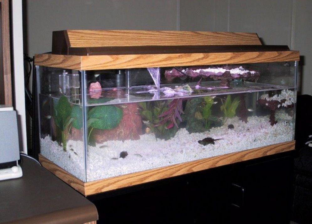 20 gallon long aquarium design aquariums pinterest for 20 gallon fish tank decoration ideas