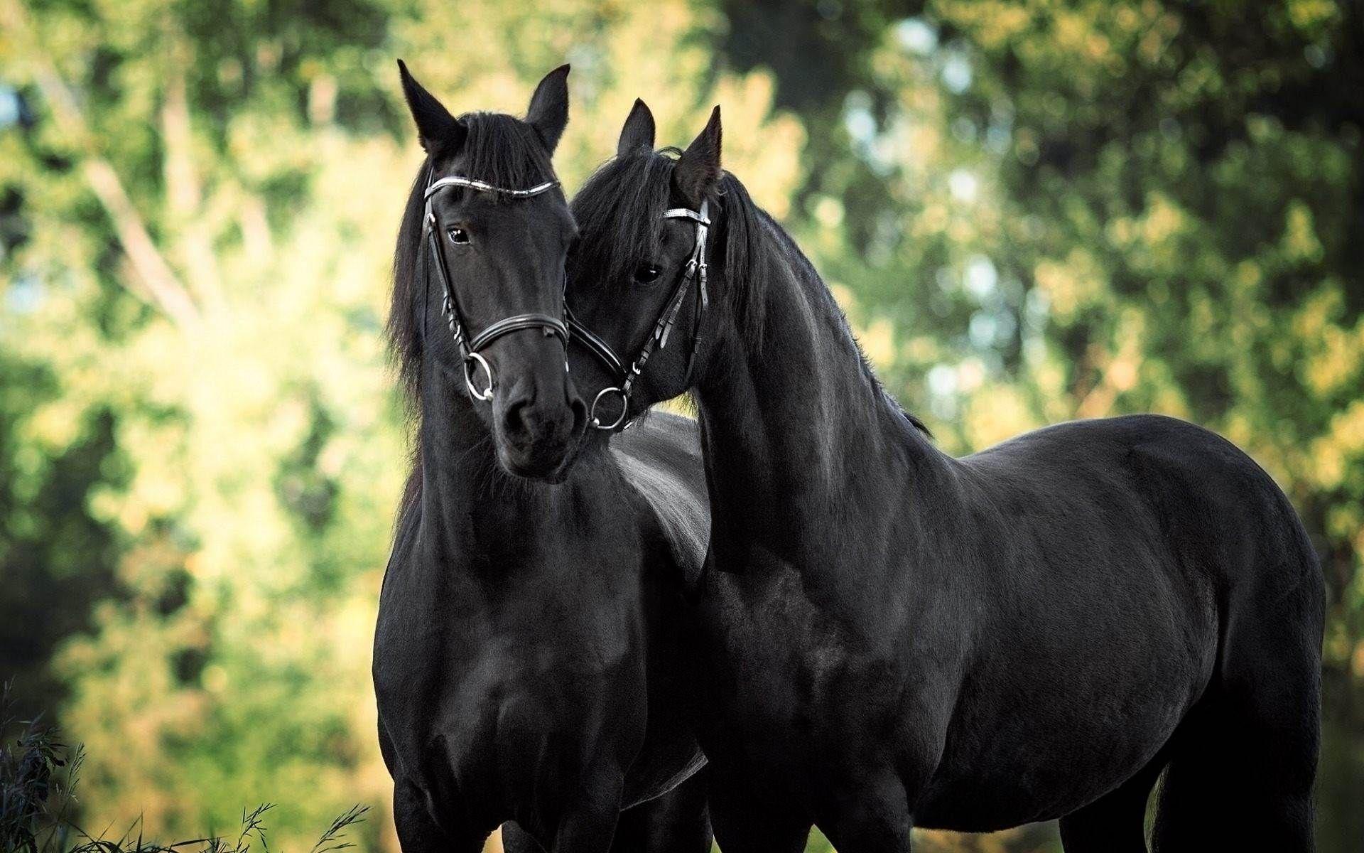 картинки обои для телефона лошади