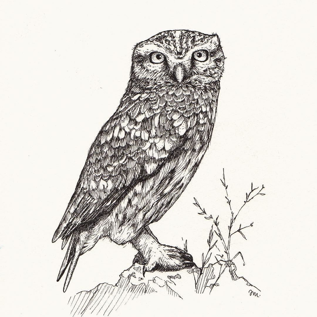 Day 4 of inktober athene noctua another critically endangered another critically endangered species from the red list the little owl steinkauz while the ancient greeks knew it as the symbol of goddess athena in biocorpaavc Image collections