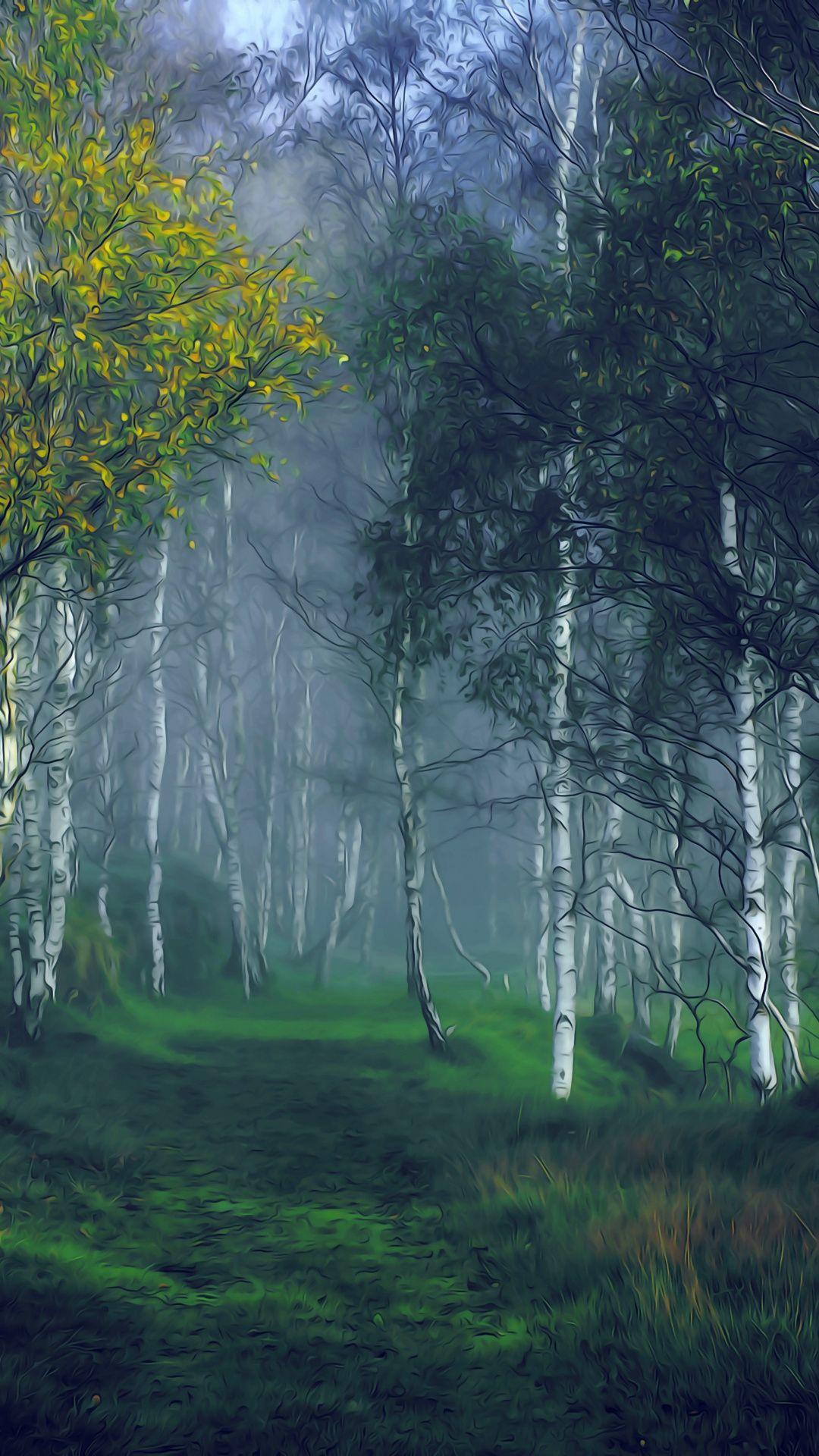Birch Forest Tree Nature Landscape 1080x1920 Wallpaper Nature Landscape Scenery