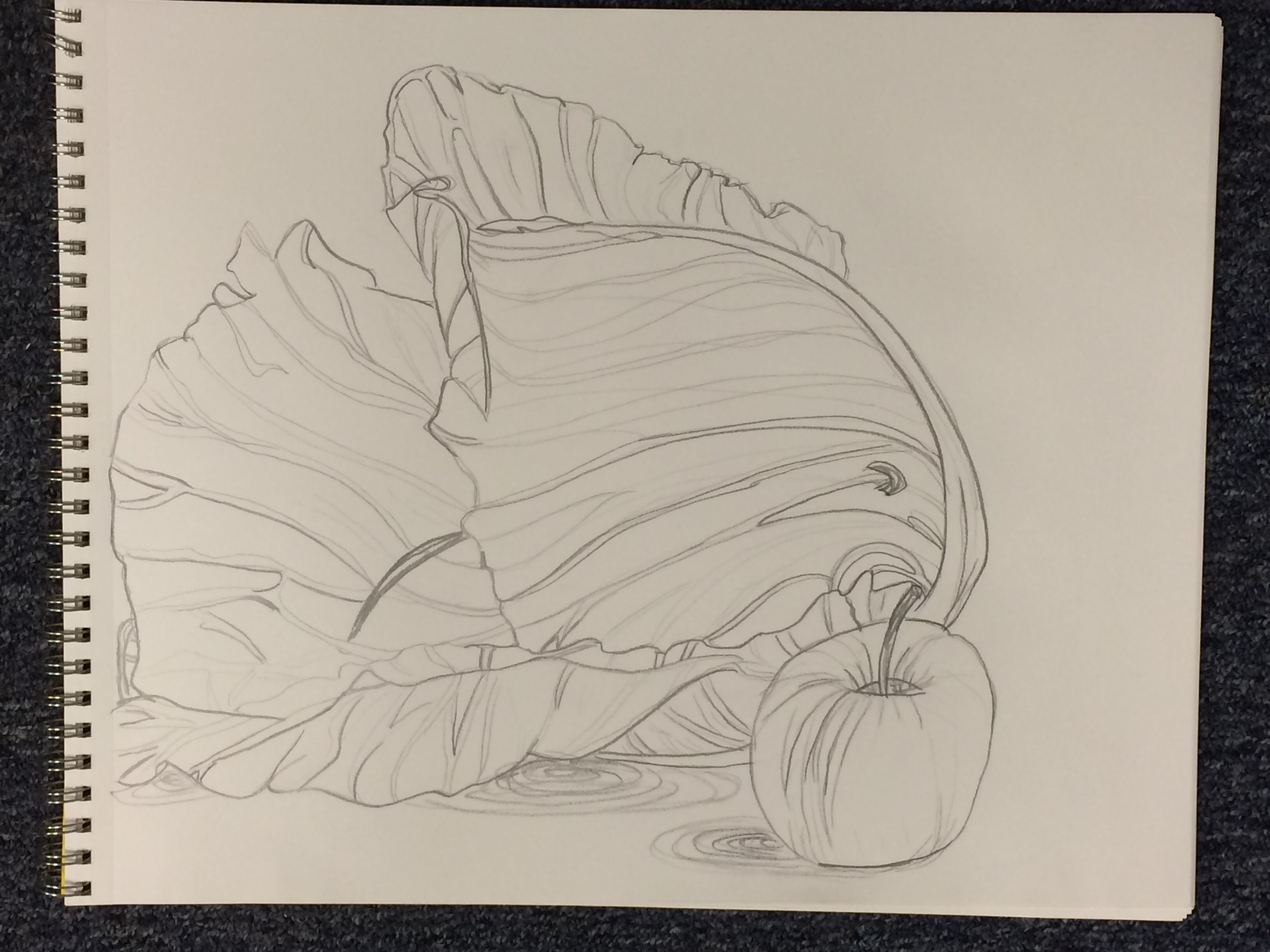 Still life w/cabbage line contour drawing by Sara