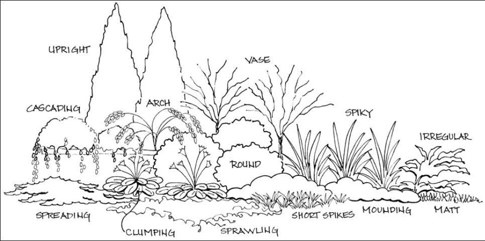 Basic Principles Of Landscape Design Figure 7 Shrub