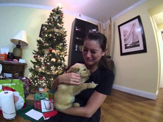 surprised my wife with a golden retriever puppy for christmas get the best deals for christmas shopping click here the day after her pet dog passed away - What Should I Get My Wife For Christmas