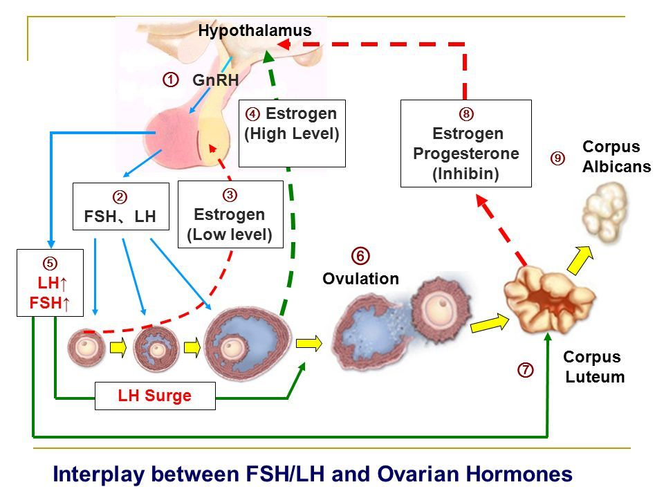 Hormonal feedback in normal cycle IMLE Pinterest