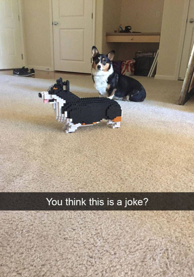 It's my cake day - so I am reposting my favorite doggo memes #humorsgifs It's my cake day - so I am reposting my favorite doggo memes - Imgur #humorsgifs