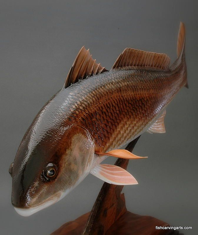 This fish is so pretty wood carving tailing reds fine art