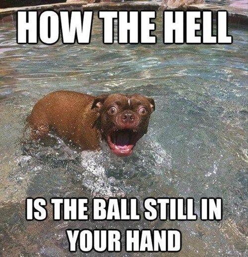awestruck pup