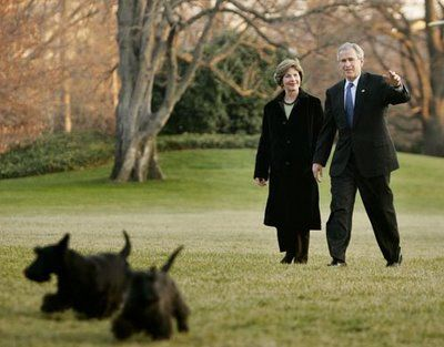 The Bushes Scottish Terriers Barney And Miss Beazley Weazley