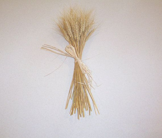 Dried Wheat Bundle For Decorating Dried Wheat Wheat Bundle Fall Thanksgiving Decor