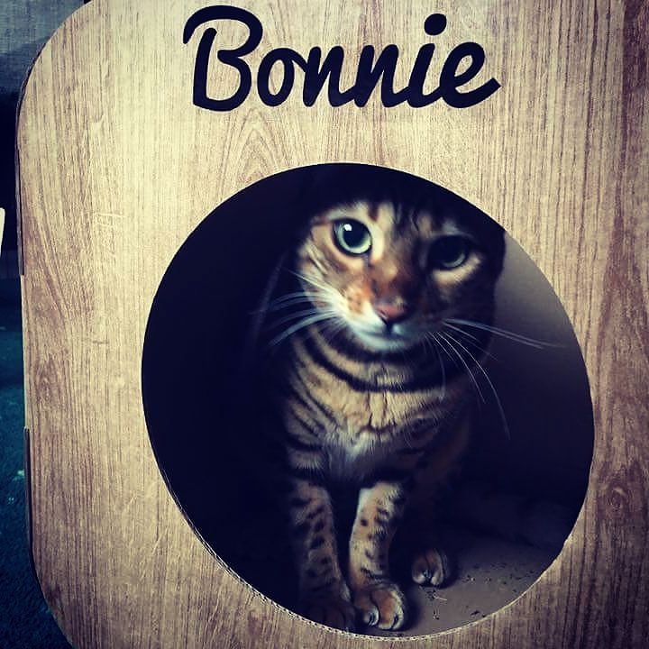 Oh wow! Bonnie is so beautiful  what a pretty face  awww thank you  we are so glad she likes it #cat #catsofinstagram #cats_of_instagram #catfurnature #catfurniture #catsinboxes #cattoy #INSTACAT_MEOWS #cutecat #PurrMachine #catsinboxes #catbox #Excellent_Cats #BestMeow #dailykittymail #thecatniptimes #catcube #catpod #ArchNemesis #FlyingArchNemesis #myindoorpaws #ififitsisits #cutecatcrew #catchalet #catnip #themeowdaily #kitty #catpyramid #pyramid