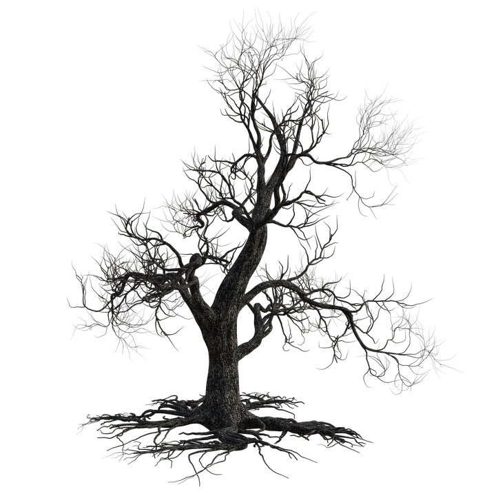 Free Image On Pixabay Dead Tree Scary Halloween Nature Dead Tree Tattoo Scary Drawings Tree Images