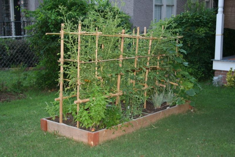 Bamboo Trellis Climbers In Raised Bed Gardens Raised Garden Beds
