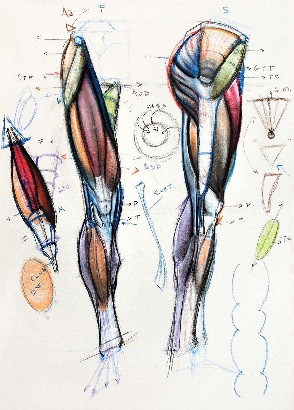 Pin de JiJi JuKi en anatomia | Pinterest