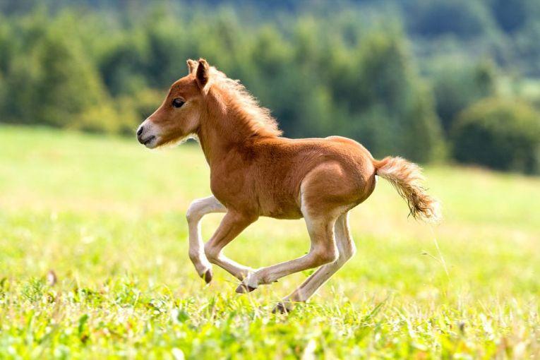 The Horse Quiz Horses Baby Horses Pretty Horses
