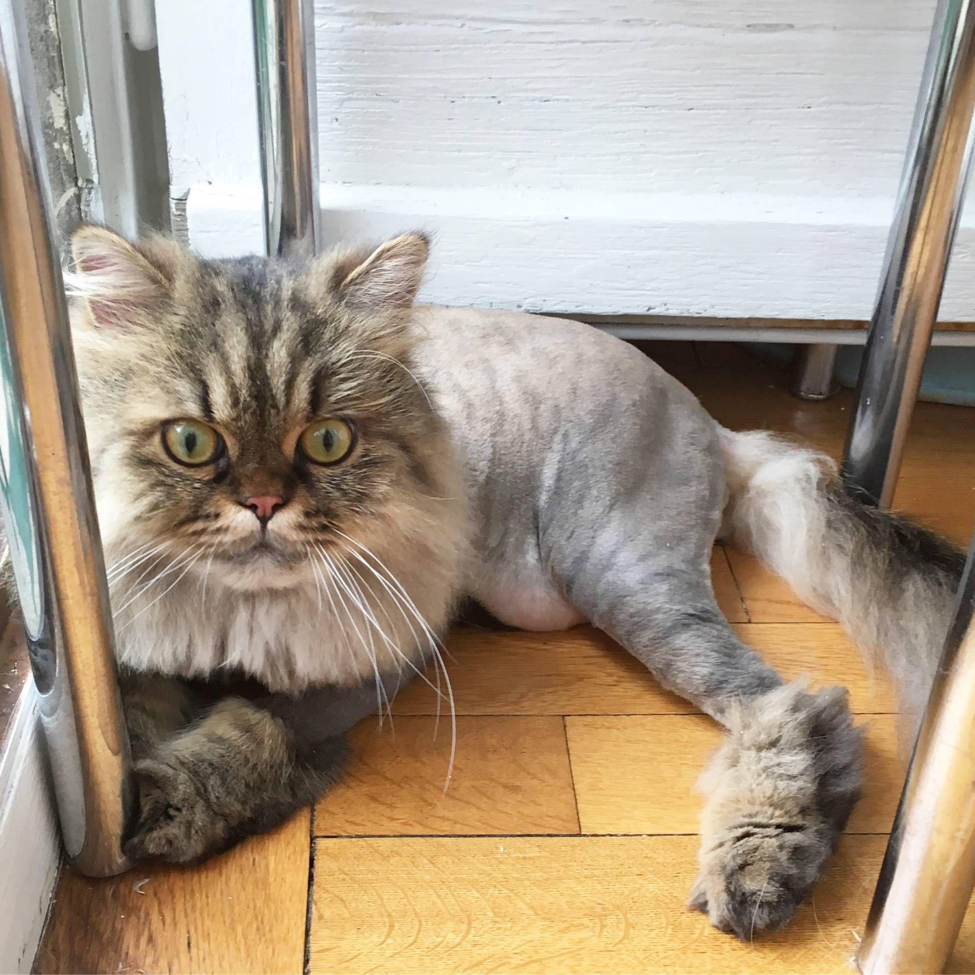 Pin on Lion Cat