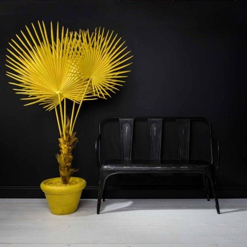Fan Palm in Pot in Yellow Black bench, Palm and Bench - pflanzen für wohnzimmer