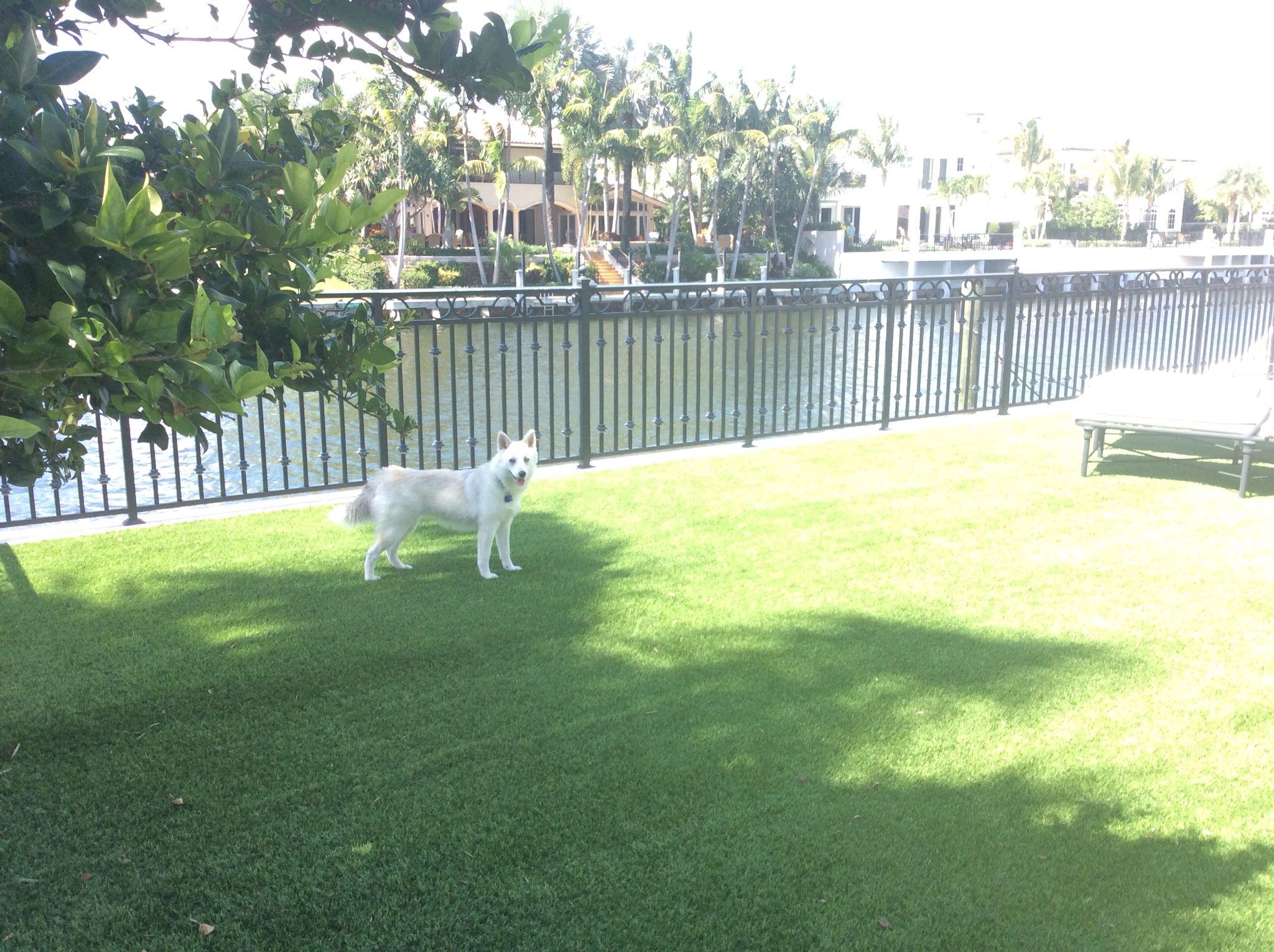 Boca Raton backyard   Backyard