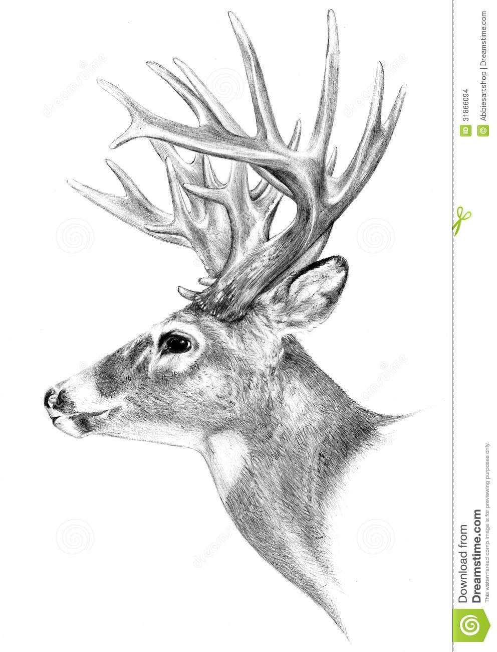 deer pencil drawing - Google Search | Animal silhouette | Pinterest ...