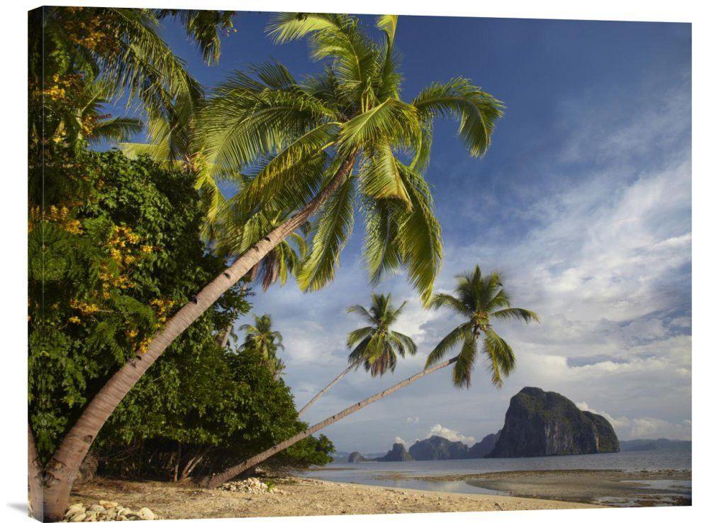 palm trees pinagbuyutan island palawan philippines palawan philippines and palm. Black Bedroom Furniture Sets. Home Design Ideas