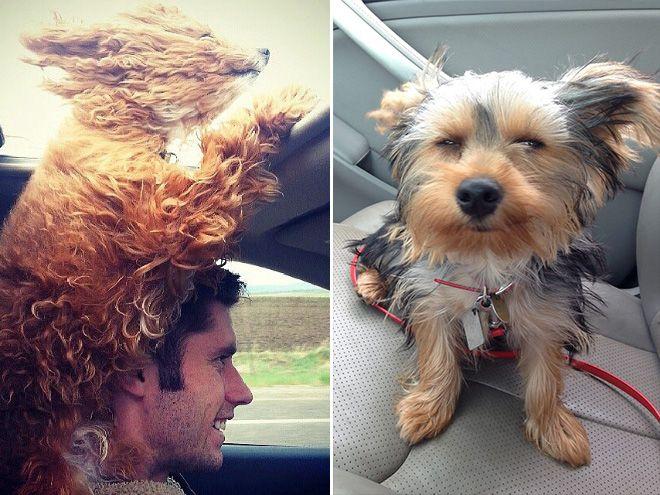 Diese 14 Hunde Lieben Es Ihren Kopf Aus Dem Autofenster Zu Hangen