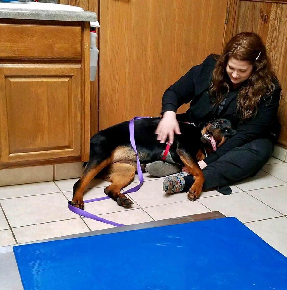 Dakota Veterinary clinic, Veterinary, Janesville