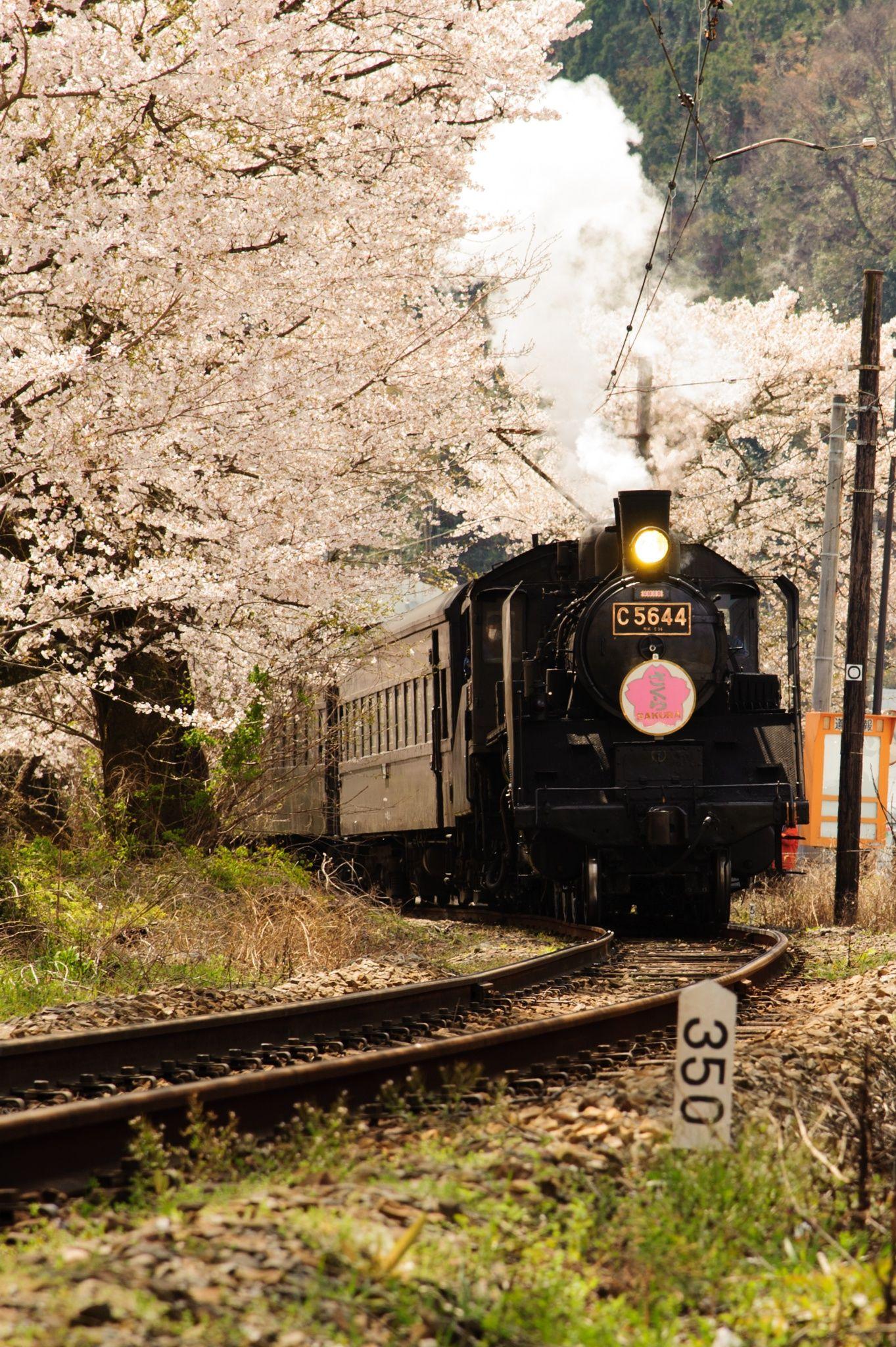 Steam Train Sakura by Carol Scaglia on 500px | Train ...