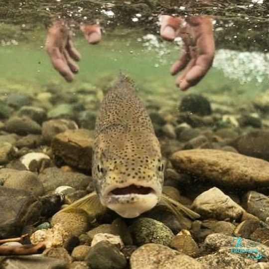 Releasing Fish Salmon Fishing Trout Unlimited