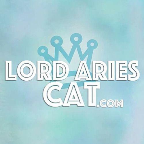✨ www.LordAriesCat.com ✨ #LordAriesCat (em LordAriesCat.com )