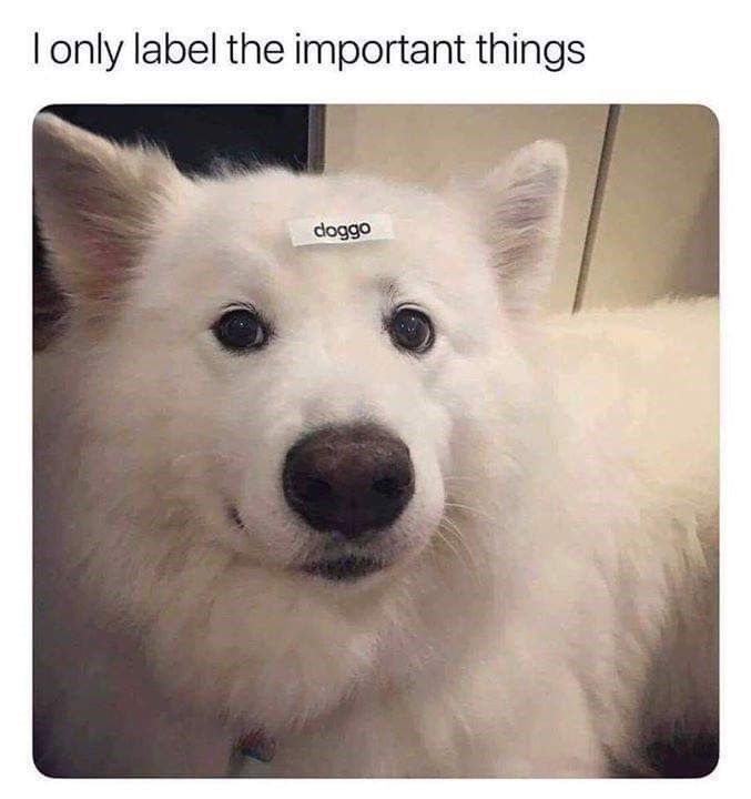 We all need some cute dog memes right about now. #Memes #Dogs #Animals