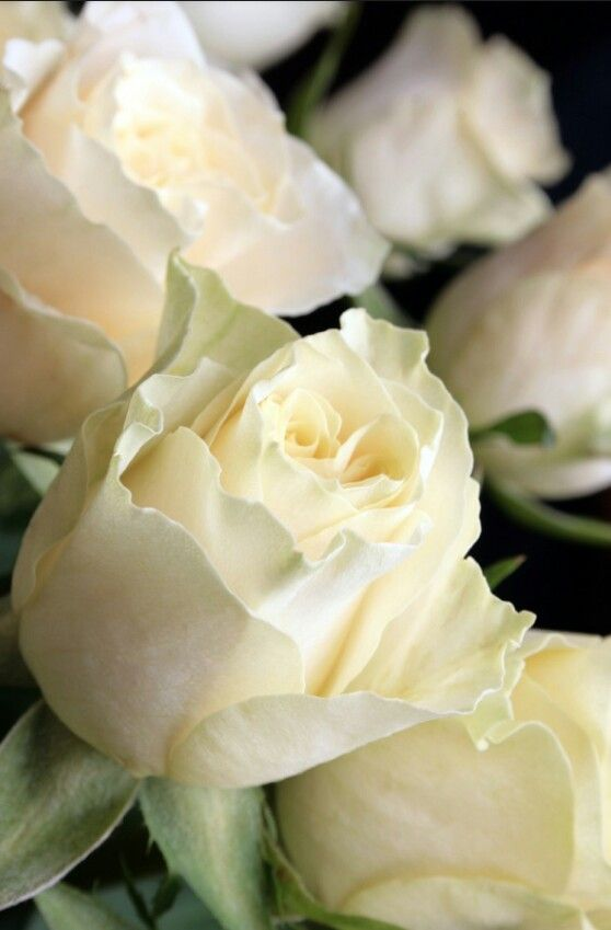 White roses for Mother's day!