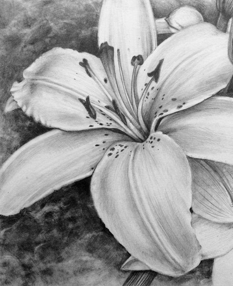 Lily (WIP) by RubyRyn on DeviantArt in 2020 Disney art
