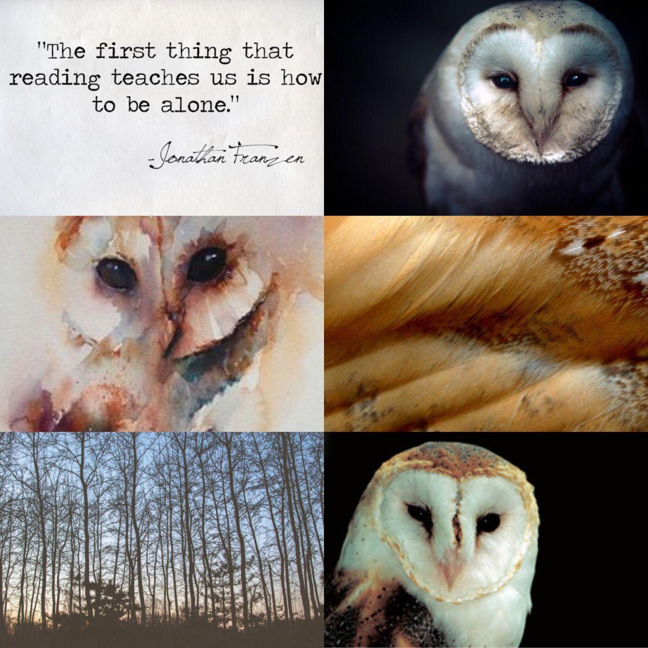 VIRGO ANIMAL//aesthetics: Barn owl symbolism: intelligence ...