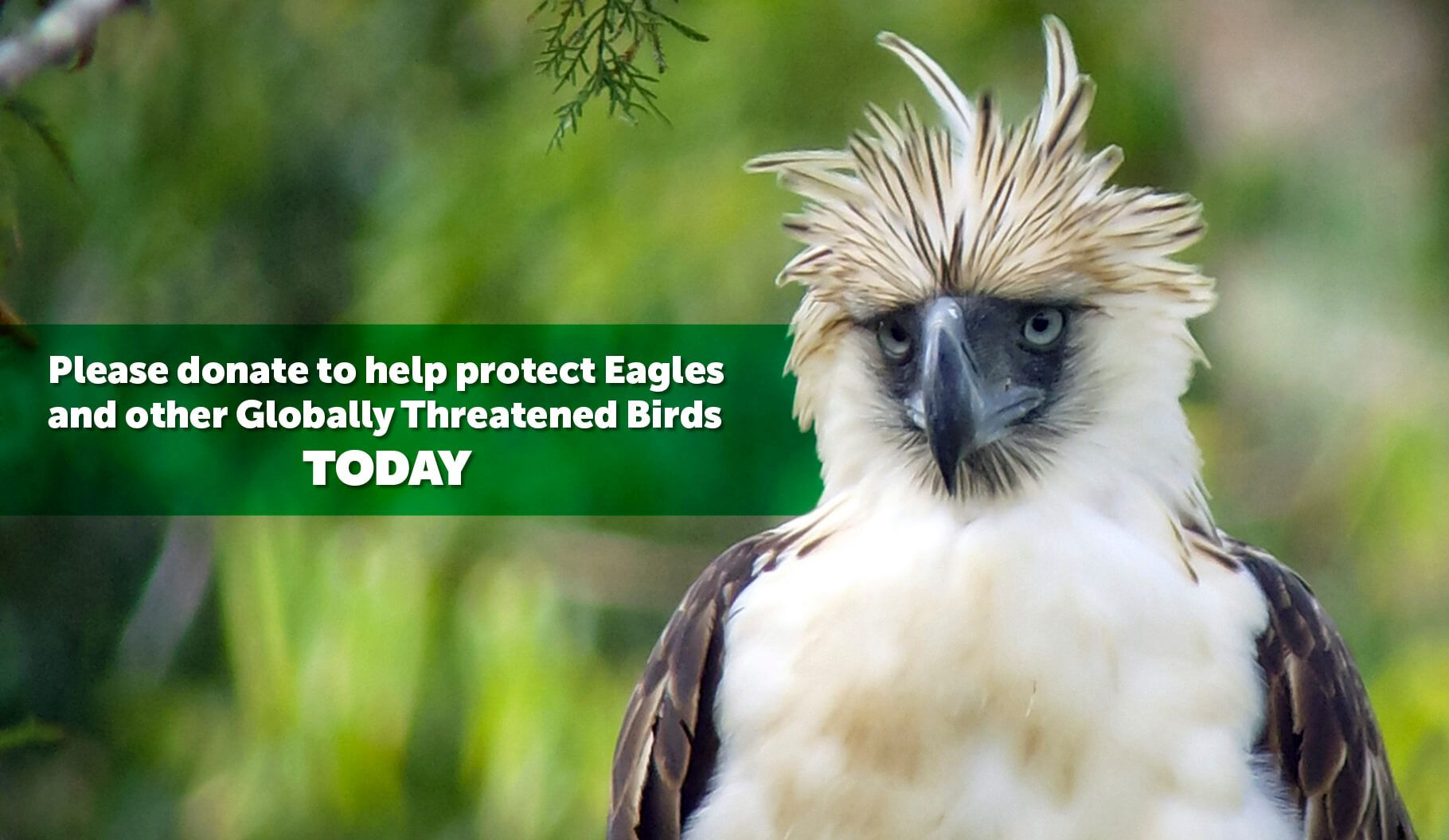 List Of Eagle Species Largest Bird Of Prey Species Eagles