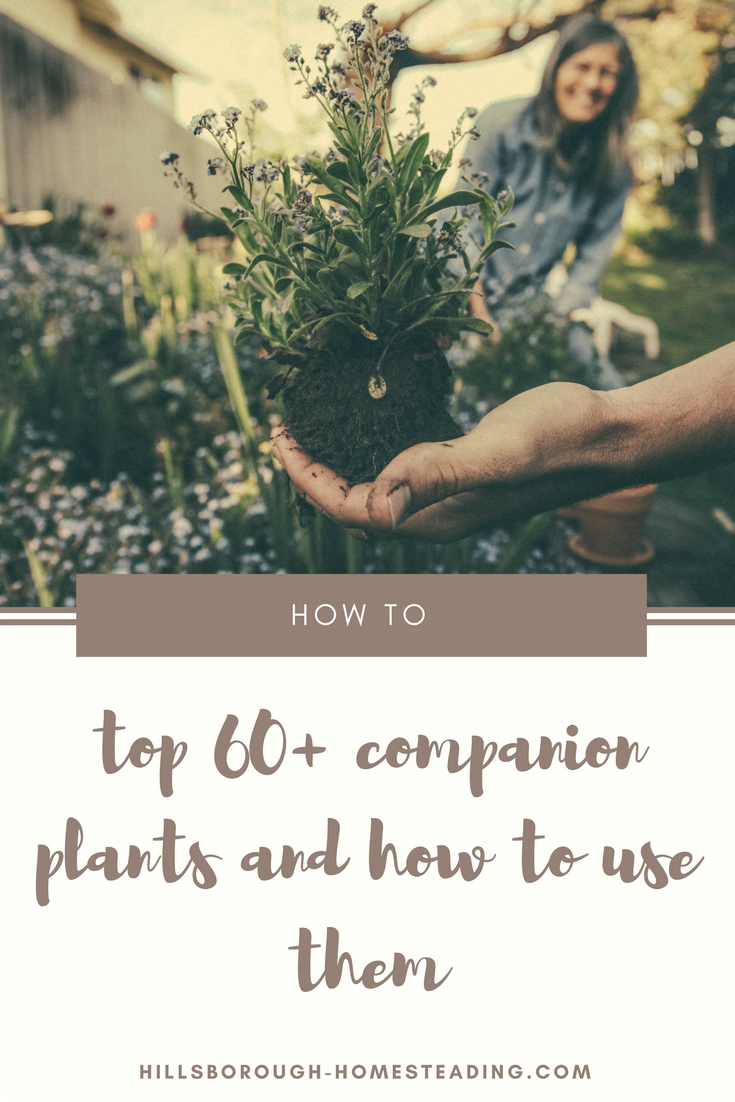 The Top 60 Companion Plants And How To Use Them 400 x 300