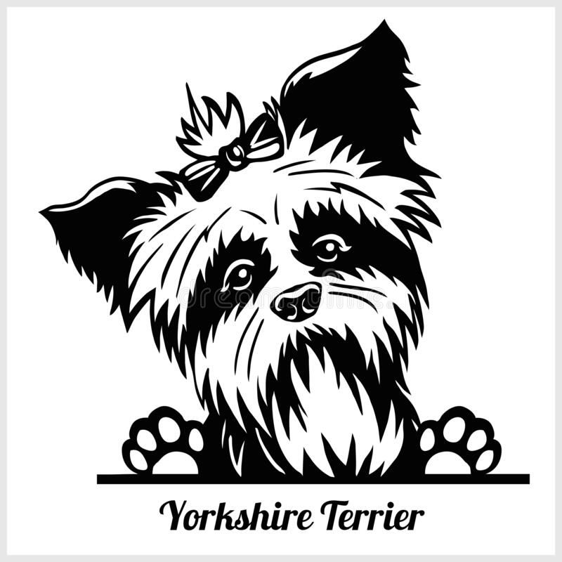 Yorkshire Terrier - Peeking Dogs - - Breed Face He