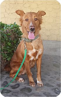 Irvine, CA - Border Collie Mix. Meet PAM, what a beauty!, a dog for adoption. http://www.adoptapet.com/pet/10945651-irvine-california-border-collie-mix