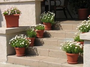 Plantas em vasos – cuidados com substrato inerte e limpeza!