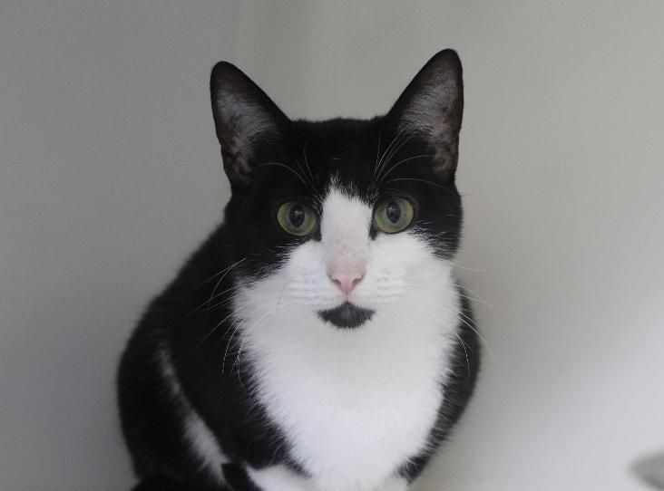 PURDY Find a pet (With images) Cattery