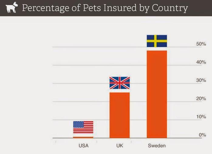 Pet Insurance Quotes Blog Pet Insurance America Vs Europe Pet Insurance Quotes Pet Insurance Pet Care