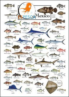 Infograf as de peces 10 pesca pinterest fotos de for Clases de peces de acuario
