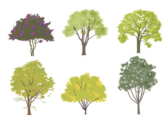 Choosing the Right Tree | Tree drawing simple, Tree ...