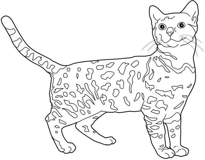 Bengala disegni da colorare per adulti e ragazzi disegni - Pagine da colorare ruth e naomi ...